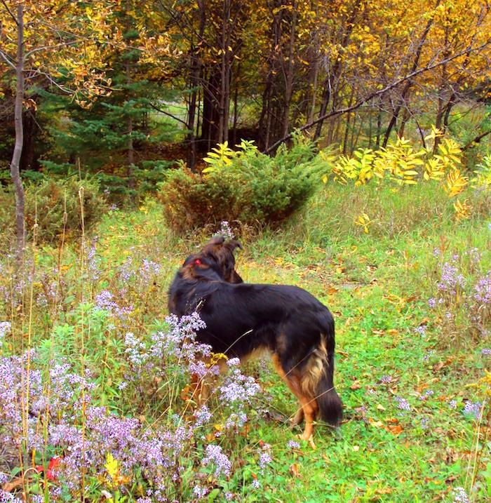 Hierbas para perros con alergias