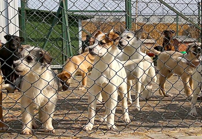 Enriquecimiento de audiolibros para perros de refugio