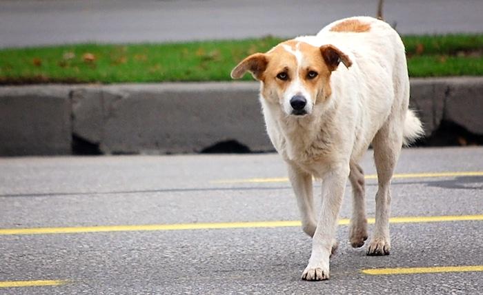 Qué hacer cuando ves un perro perdido