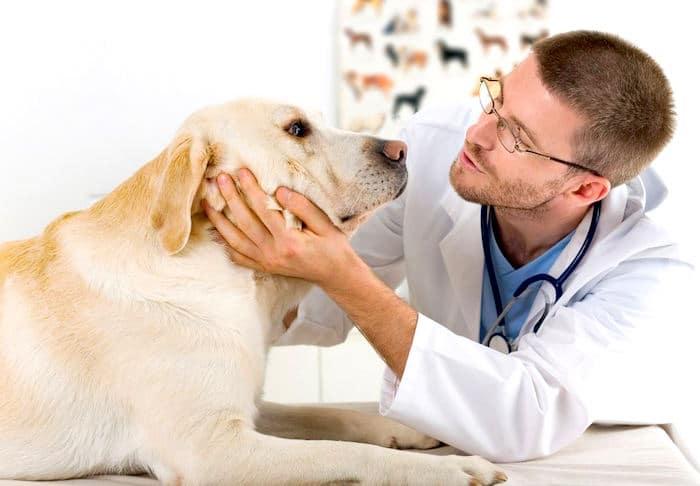 Cómo elegir su veterinario