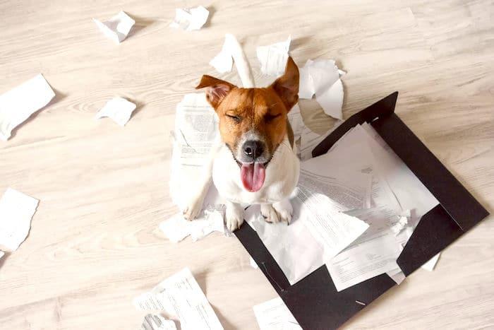 Consejos para su casa a prueba de cachorros