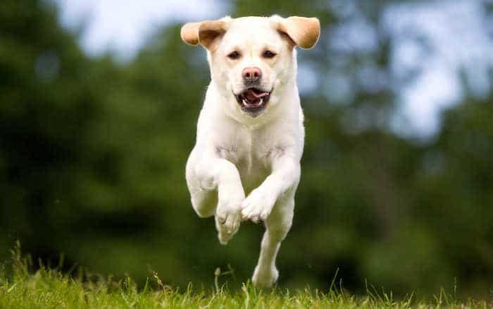 Cómo enseñar a tu perro a no saltar sobre las personas
