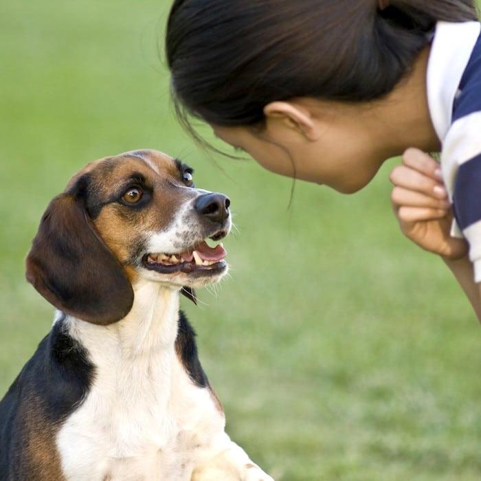 Wie Sie Ihrem Hund das Bleiben beibringen