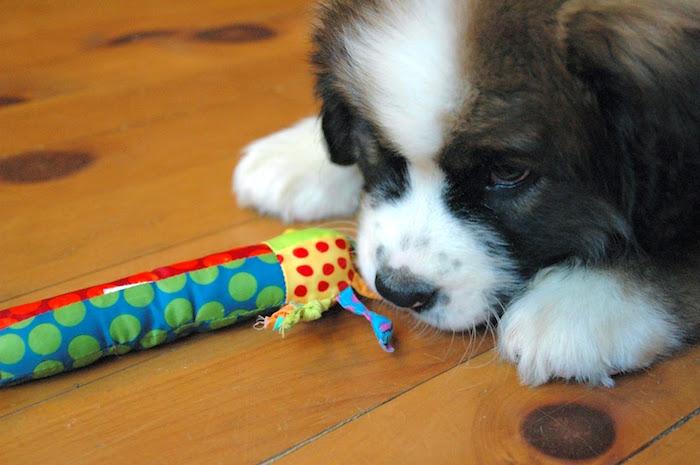 Cómo enseñarle a tu perro a dejarlo