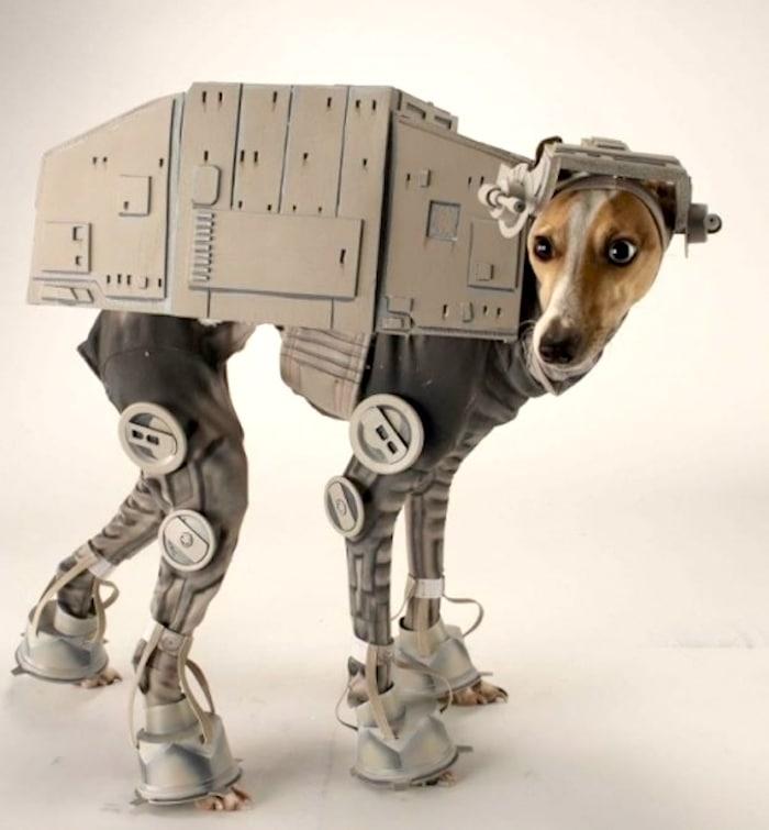 Robótica y entrenamiento del perro
