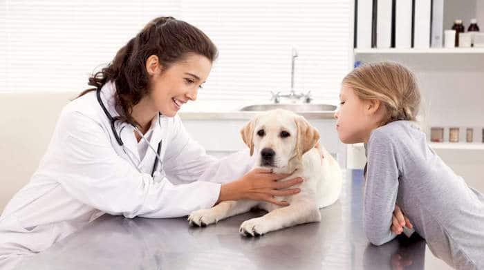 Cómo mantener las facturas de veterinario bajas