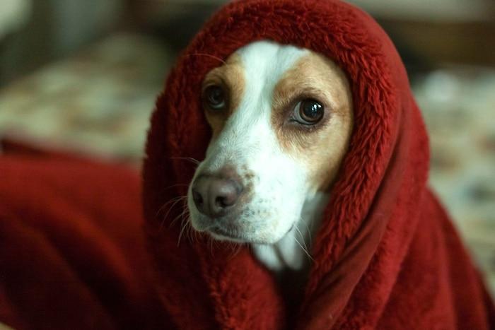 Cómo administrar la fobia a las tormentas en los perros
