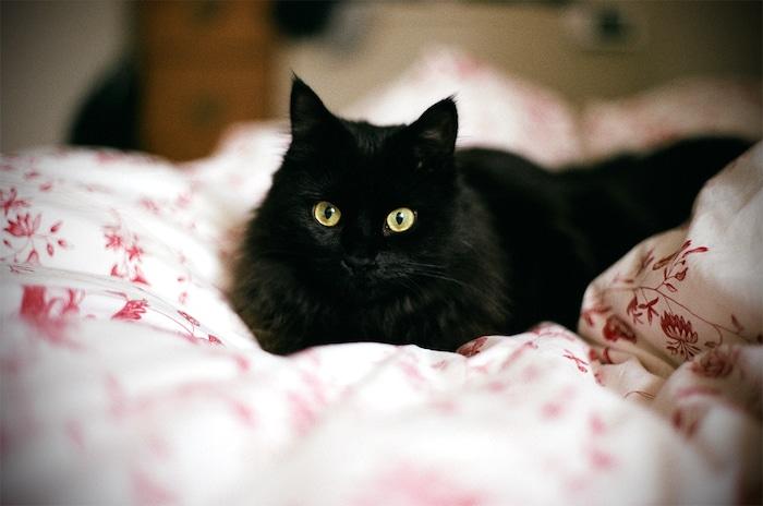 Qué hacer si tu gato te mantiene despierto por la noche