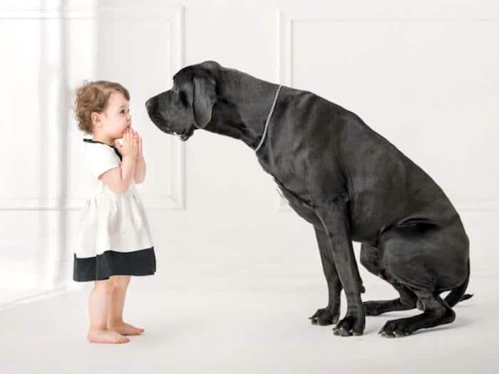 Enseñando a los niños sobre el comportamiento canino
