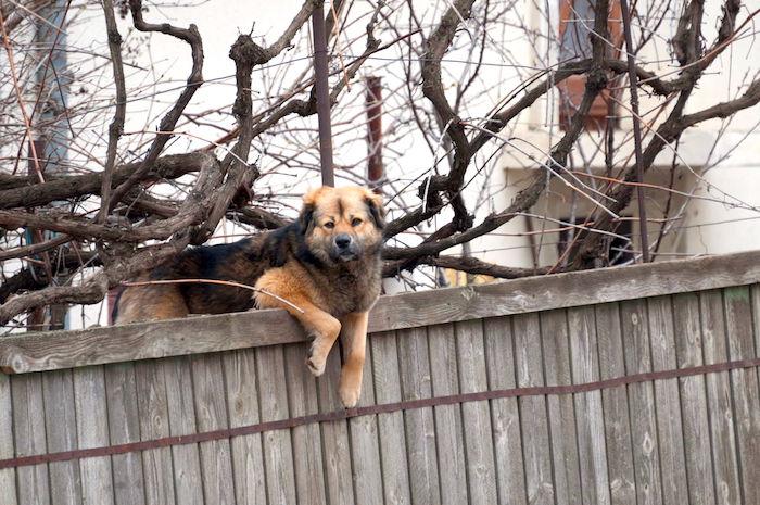 ¿Tu perro es un Houdini?