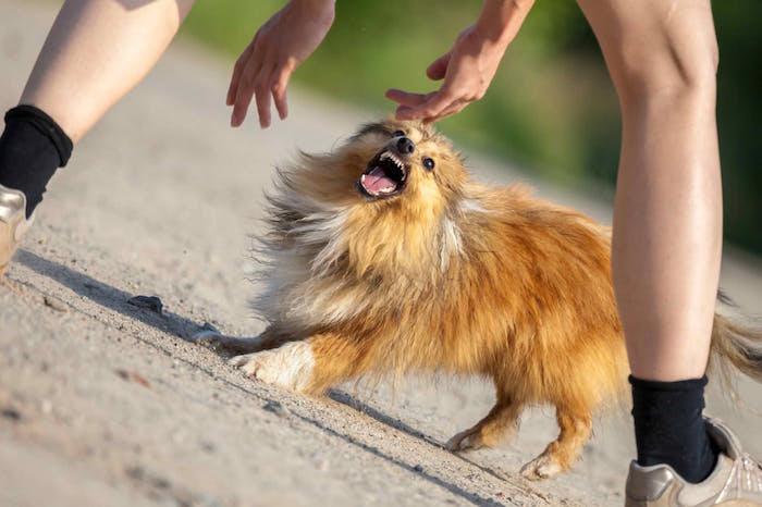 ¿Tienes un perro dominante?
