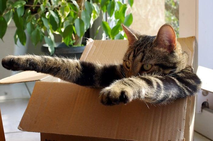 Las 9 preguntas más buscadas en Google sobre gatos