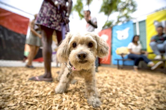 Cómo prepararse para el parque para perros