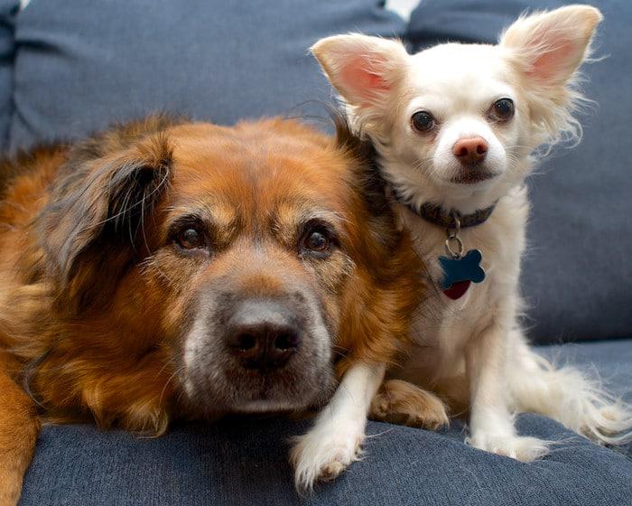 8 consejos para ayudar a su perro o gato mayor a aceptar una nueva mascota familiar