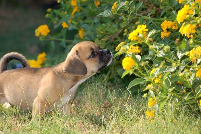 Flores seguras para mascotas para el hogar