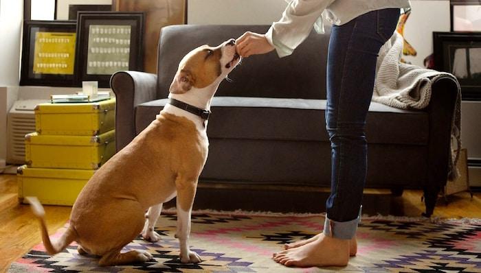 Cómo darle a tu perro una pastilla