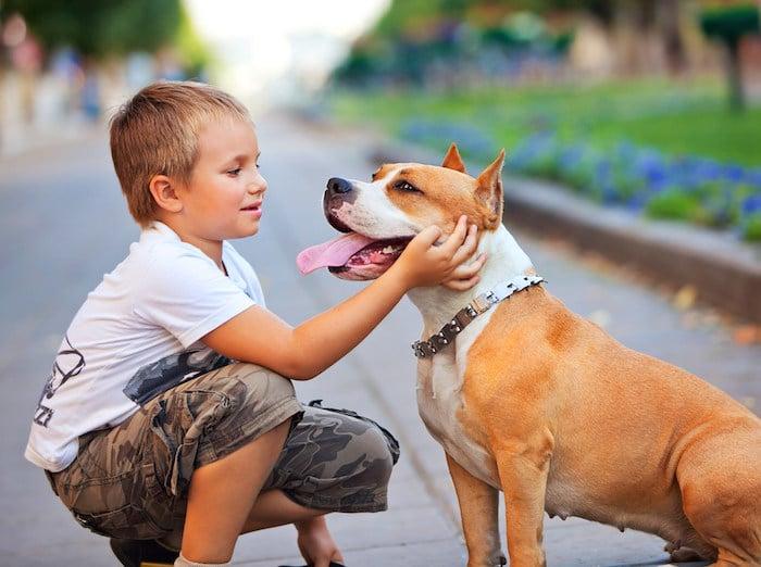 Cómo mantener a los niños seguros alrededor de los perros