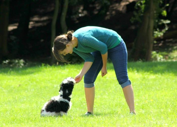 ¿Estás haciendo estos errores comunes de entrenamiento del perro?