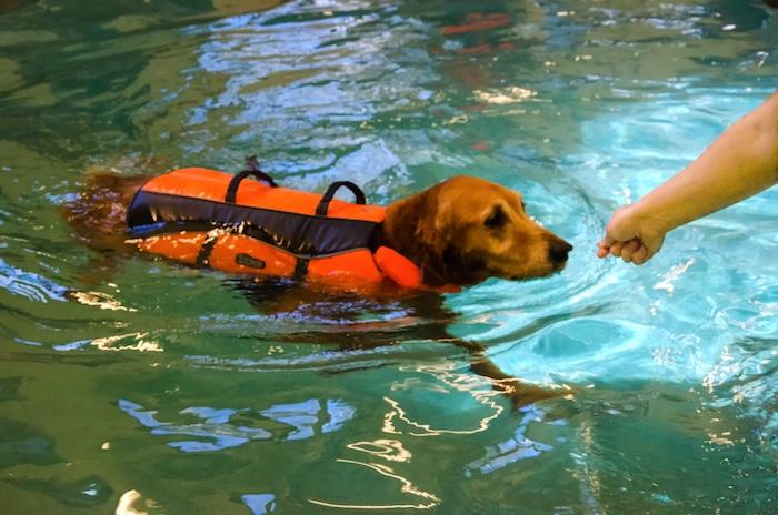 Ejercicios acuáticos para tu perro