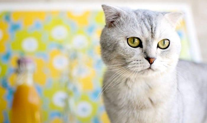 3 consejos para mantener a tu gato saludable