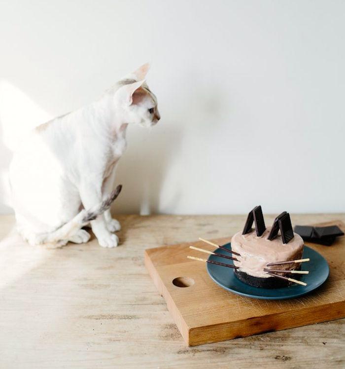 Los gatos no tienen dientes dulces