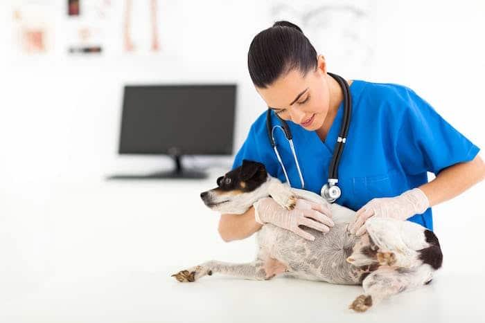 Resistencia a los antibióticos en mascotas