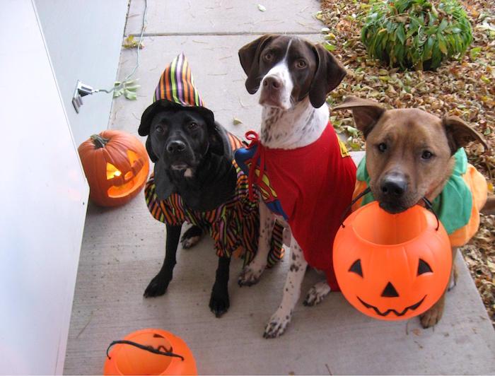 Consejos de seguridad para mascotas en Halloween