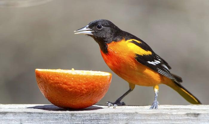 Consejos de nutrición para las Aves