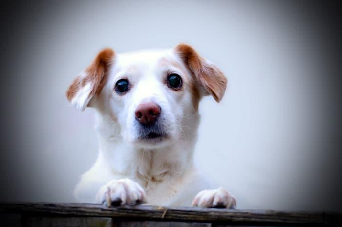 Perros mayores y apegos emocionales