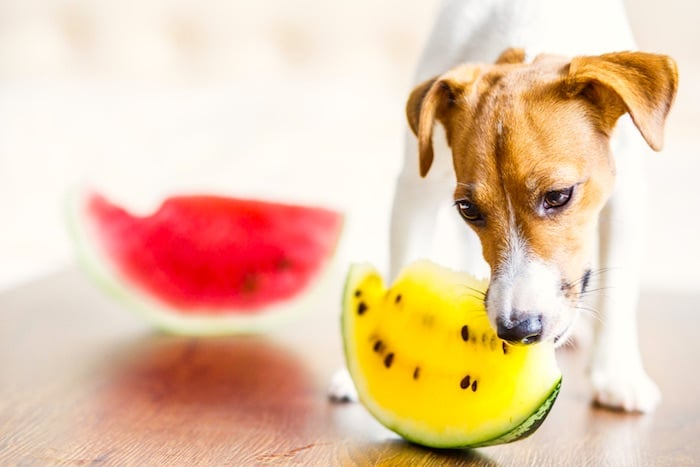 Peores frutas y verduras para perros