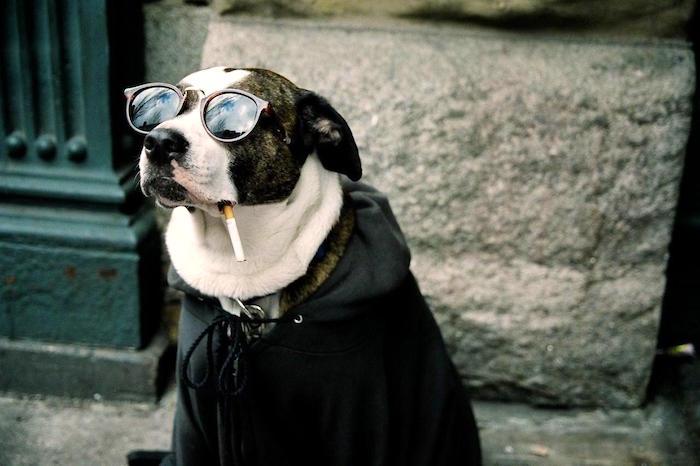 Fumadores pasivos y mascotas