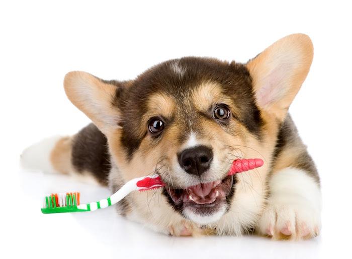 ¿Has revisado los dientes de tus perros recientemente?