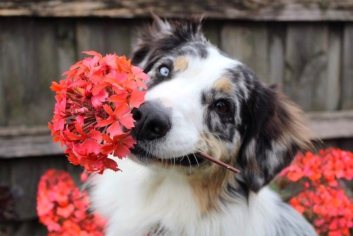 Consejos de jardinería segura para mascotas