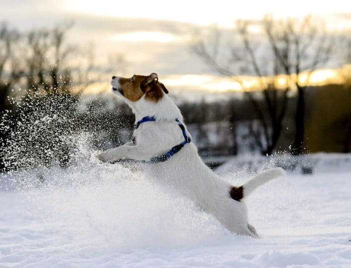 Consejos de seguridad para mascotas para el clima frío