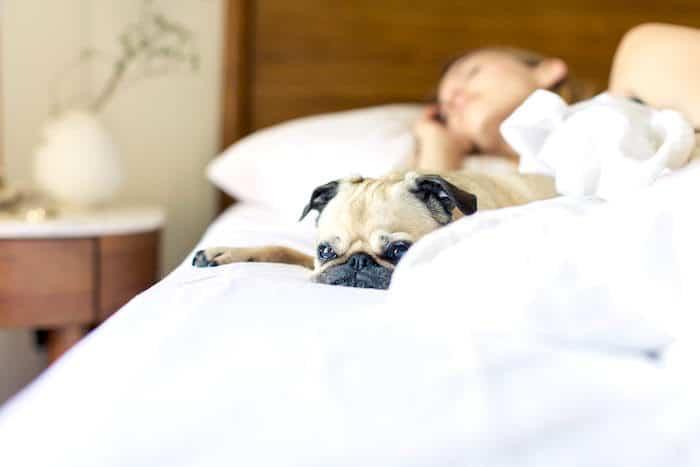 ¿Debes compartir la cama con tu perro?