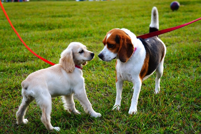Consejos para encontrar a tu perro un gran compañero de juegos
