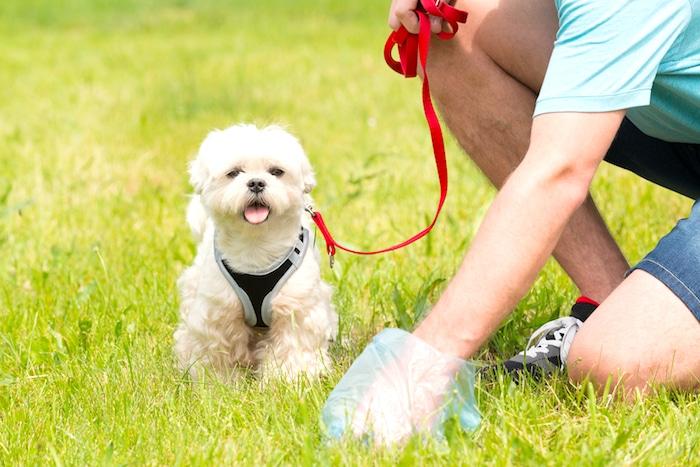 5 pasos para tomar una muestra de heces de su perro