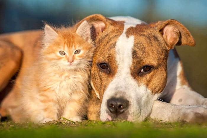 Manejo de la diabetes en perros y gatos