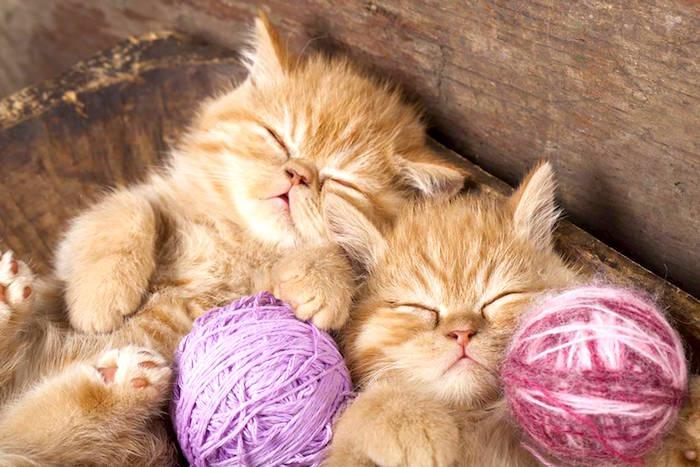 5 enfermedades que los padres de gatos necesitan saber