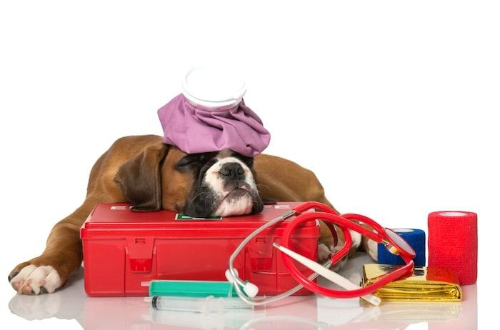 Esté preparado para una emergencia de mascotas