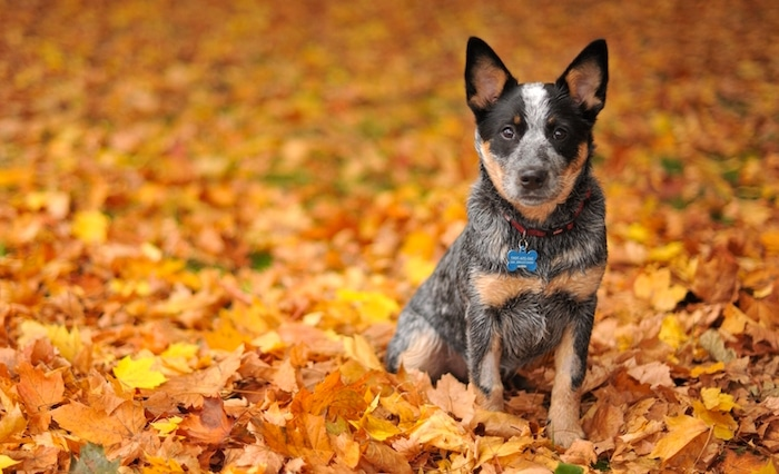 Peligros para mascotas para evitar este otoño