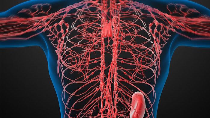 Hierbas para el sistema linfático