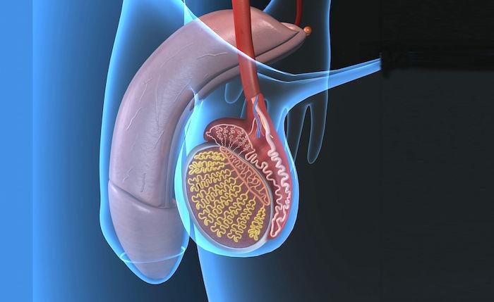 Tratamiento casero para varicocele