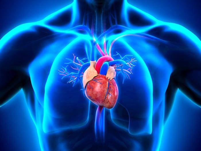 Alta presión sanguínea estrategias para novatos