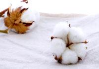 Beneficios del algodon organico