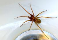Manera natural de deshacerse de las aranas