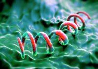 Prevención de la sífilis