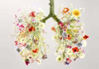 Los mejores suplementos para la salud pulmonar