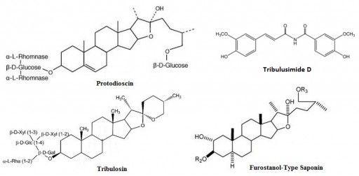 Tribulus Trerrestris Ciencia - Composición