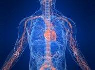 Qu'est-ce que l'oxyde nitrique et comment ça marche?